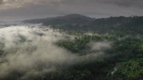 Жертвоприношение в джунглата