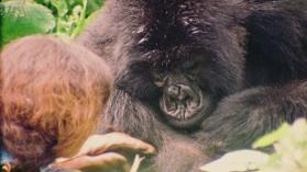 Момичето с горилите